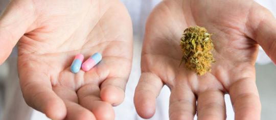 La différence entre le cannabis médical (cbd) et le cannabis récréatif (thc)